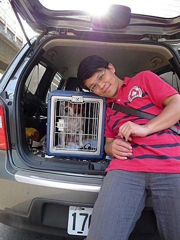 代辨寵物出國檢疫_米格魯_阿曼尼出國去_寵物出國_大陸_上海篇