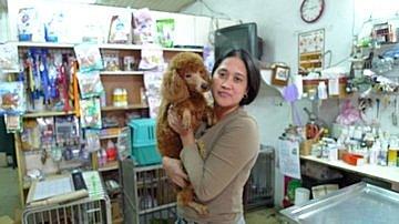 代辨寵物出國檢疫_迷你貴賓出國去_寵物出國_菲律賓篇