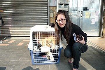 代辨寵物出國檢疫_黃金獵犬出國去_寵物出國_寮國篇