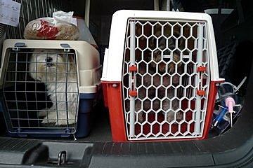 代辨寵物出國檢疫_小瑪和小雪出國去_寵物出國_大陸_重慶篇