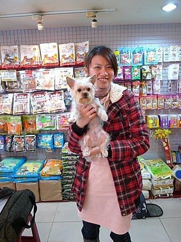 代辨寵物出國檢疫_可愛約克夏和主人一起到日本工作_寵物出國_日本篇