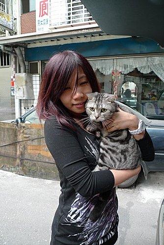 代辨寵物出國檢疫_一隻美短和一隻米克斯貓出國去_寵物出國_大陸_上海、深圳篇
