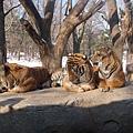 第二天_動物園.JPG