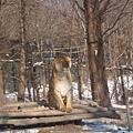 第二天_動物園這隻被獨立出來的是獅虎獅子跟老虎交配生下來的喔.JPG