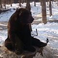 第二天_動物園黑熊.JPG