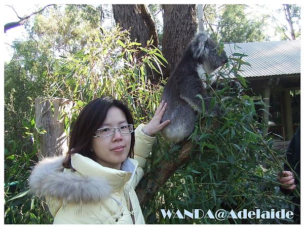 2008-06-06_排對摸無尾熊的屁屁.JPG
