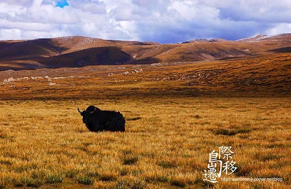 tibet05.jpg