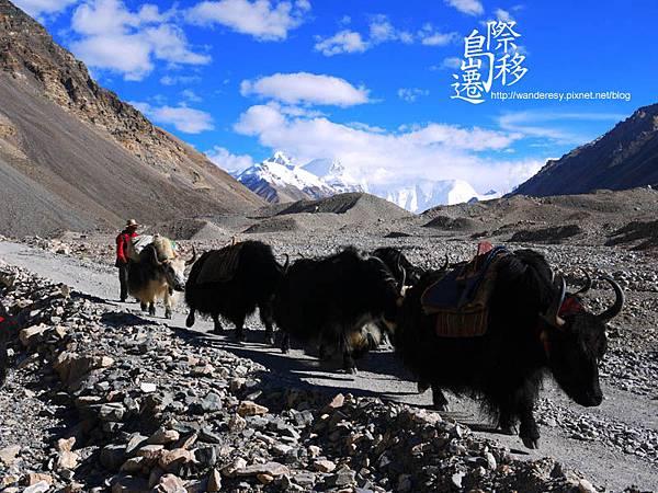 tibet11.jpg