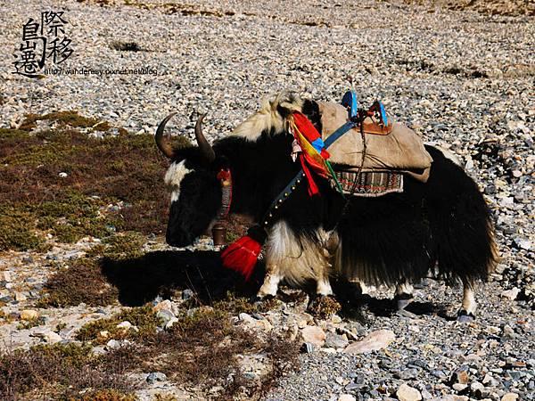 tibet12.jpg