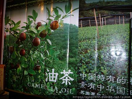 山茶樹及茶籽