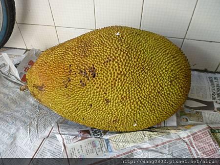 巨無霸菠蘿蜜