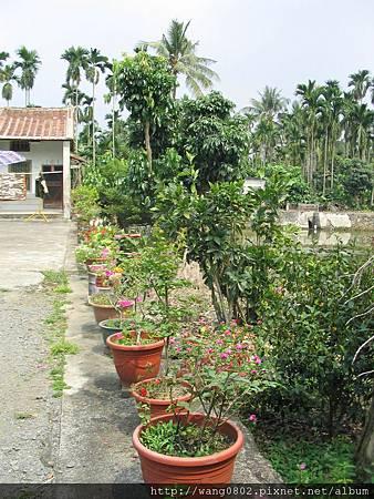 你分得出椰子樹和檳榔樹嗎?.JPG