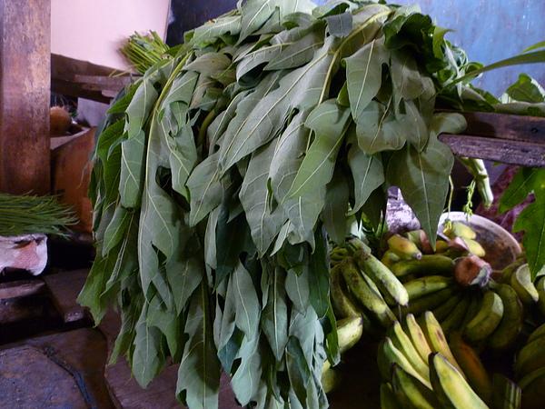 棉蘭市場賣的木薯葉.JPG