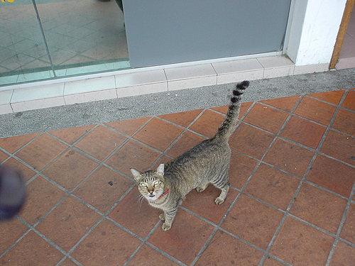 030-黏人小貓