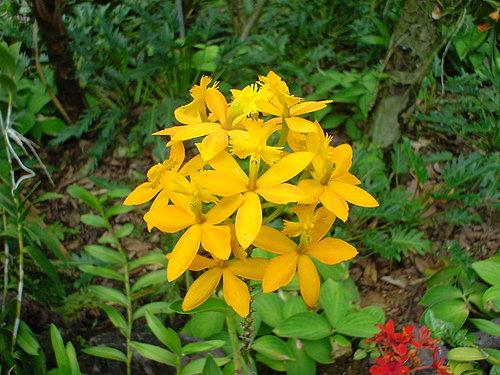 089-National Orchid Garden內蘭花