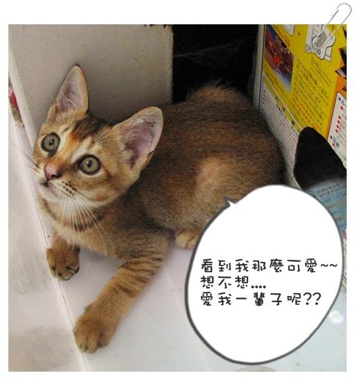 小貓認養01 004.jpg