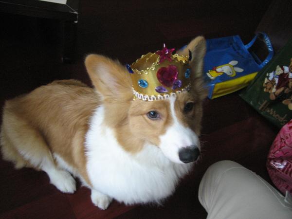 王子WANG03