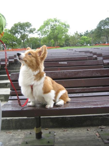 Wang大安公園06