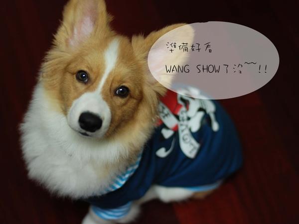 wang show01.jpg