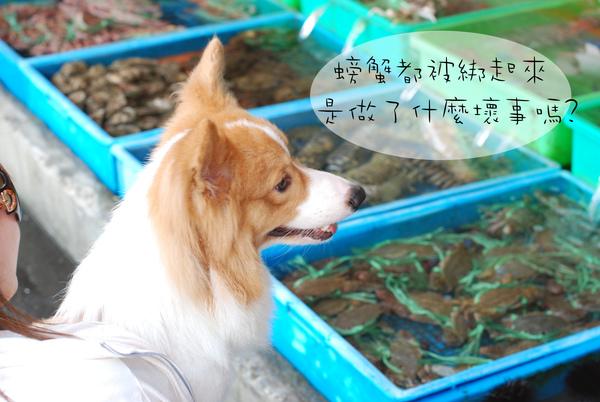 富基漁港08.jpg