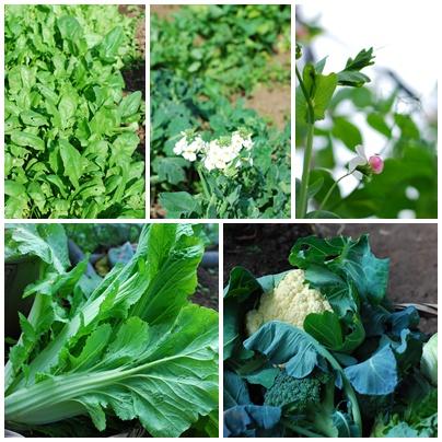 蔬菜01.jpg