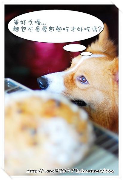 2010.04做麵包 008.jpg