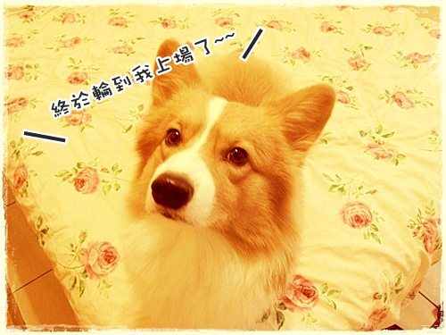WANG玫瑰花床01.jpg