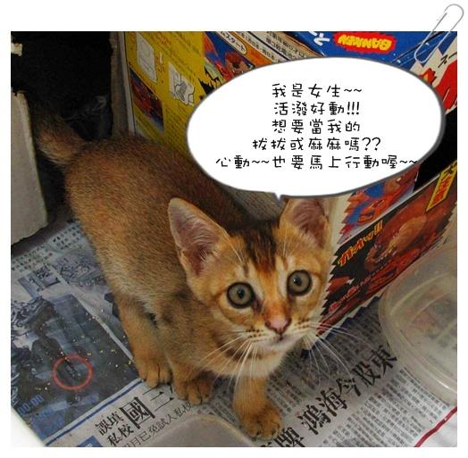 小貓認養01 001.jpg