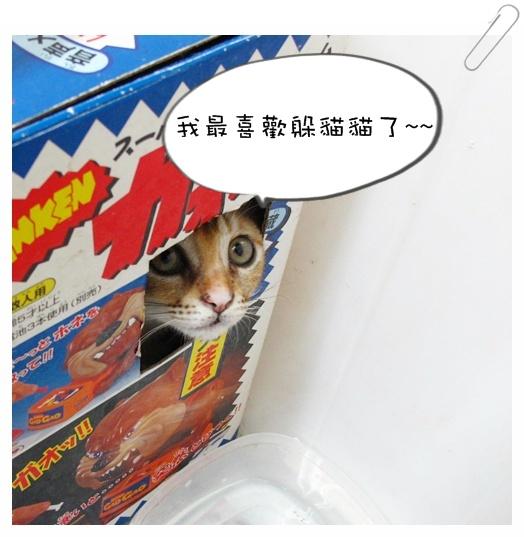 小貓認養01 002.jpg