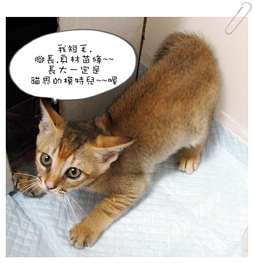 小貓認養01 003.jpg