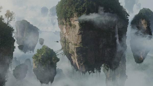 漂浮的樹.jpg