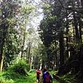 水山巨木2.jpg