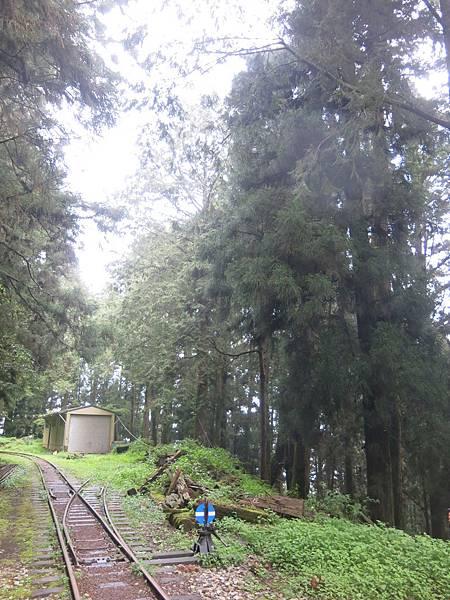 水山巨木步道3.JPG
