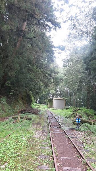 水山巨木步道2.JPG