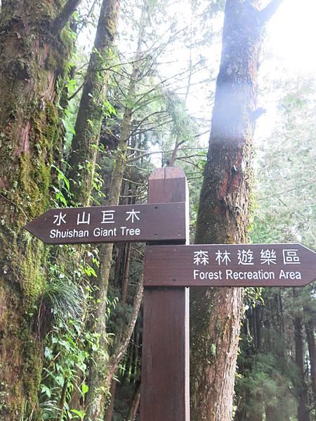 水山巨木步道5.JPG