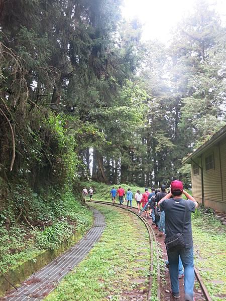 水山巨木步道4.JPG