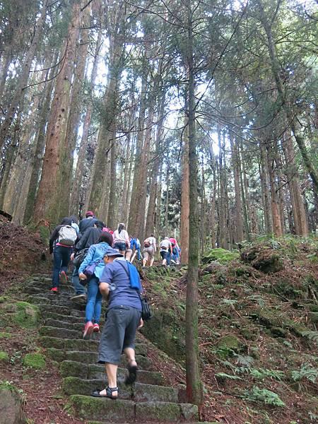 水山巨木步道6.JPG