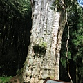 水山巨木步道7.JPG
