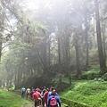 水山巨木步道9.JPG