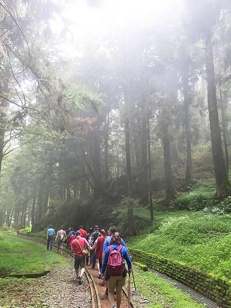 水山巨木步道11.JPG