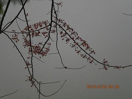 湖南楊家界 (476)