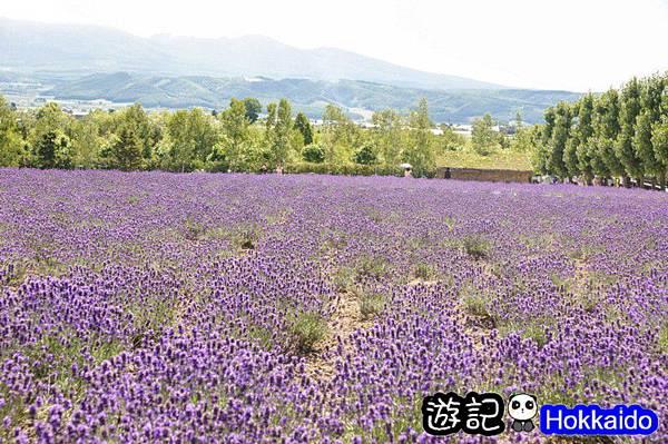 富良野FLOWER LAND花田02