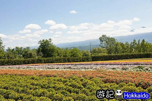 富良野FLOWER LAND花田04
