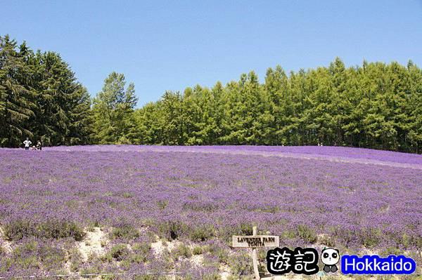 富良野FLOWER LAND花田05