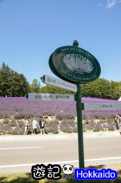 富良野FLOWER LAND花田09