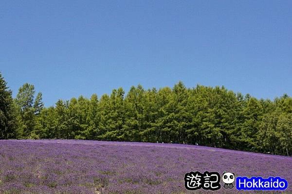 富良野FLOWER LAND花田10