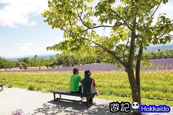 富良野FLOWER LAND花田14