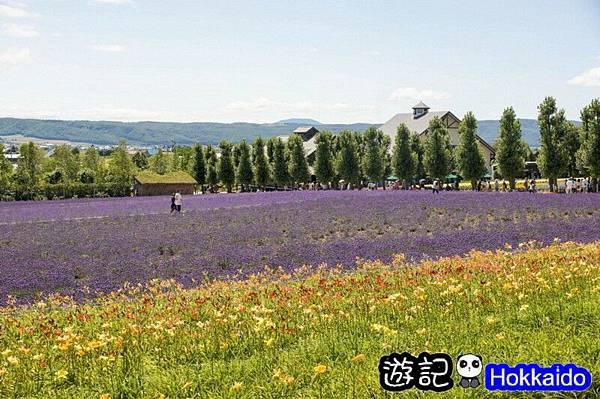 富良野FLOWER LAND花田13
