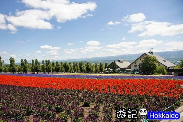 富良野FLOWER LAND花田15