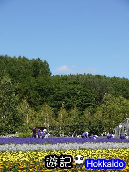 富良野FLOWER LAND花田28
